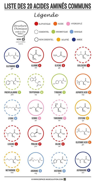 liste-20-acides-amines