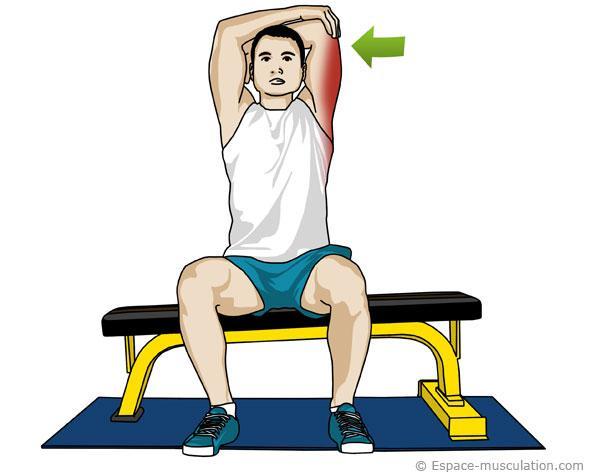 Étirement triceps