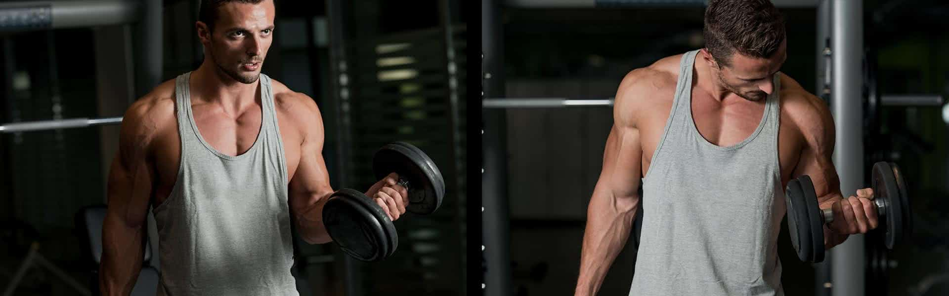 programme-musculation-biceps