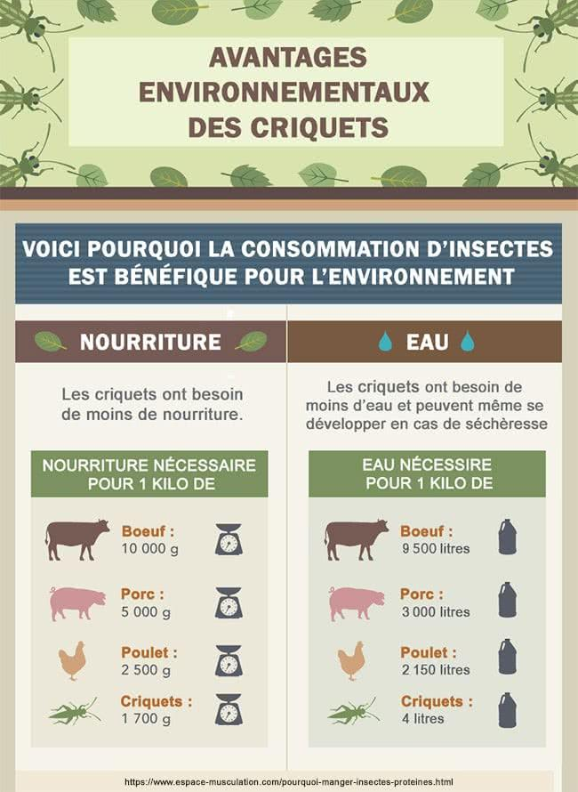 infographie-consommation-insectes