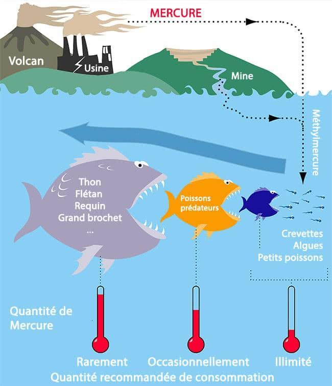 mercure-mer-poissons