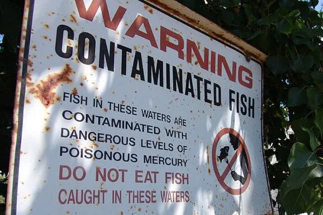 Pourquoi faut-il manger des petits poissons plutôt que les gros ?