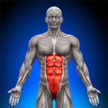 muscle-grand-droit-abdomen-anatomie