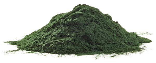 spiruline-poudre-superaliment-riche-nutriments-essentiels