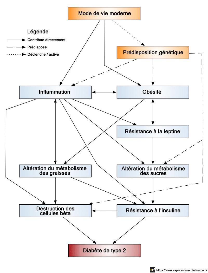 schema-comprendre-diabete-type-2